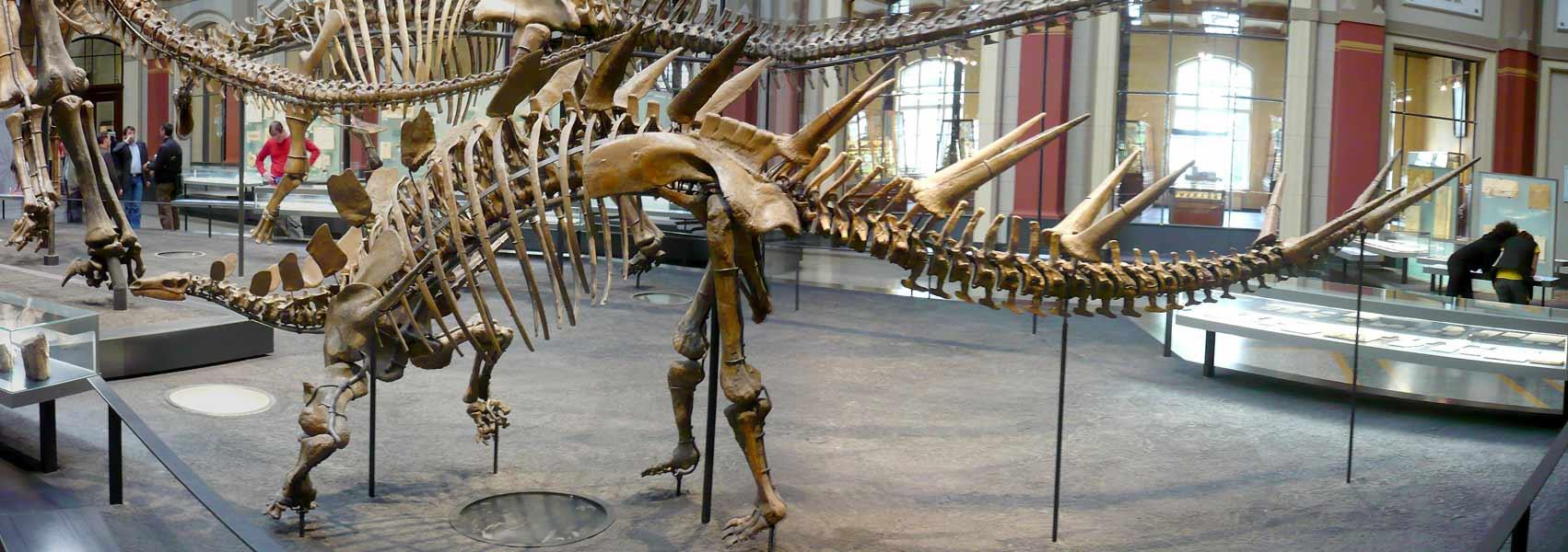 kentrosauruspanoweb.jpg