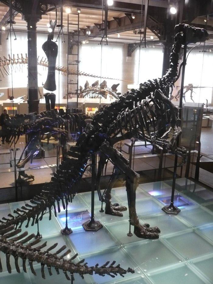iguanodonbruxelles.jpg